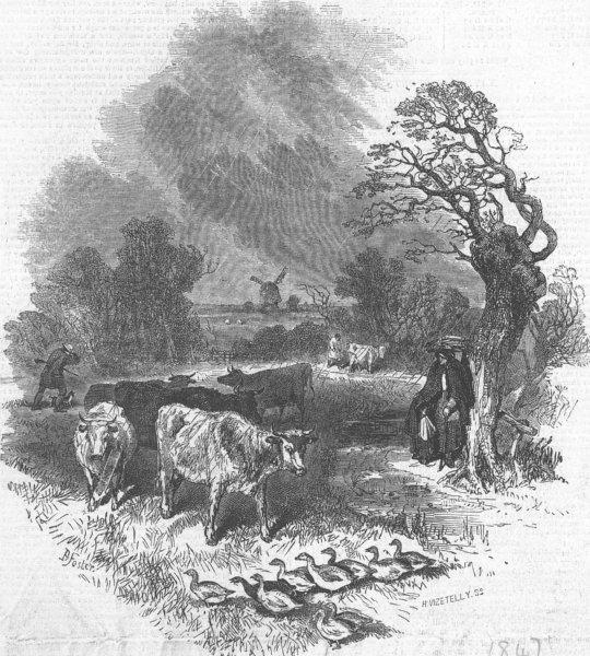 Associate Product COWS. {Caption cut off}, antique print, 1847