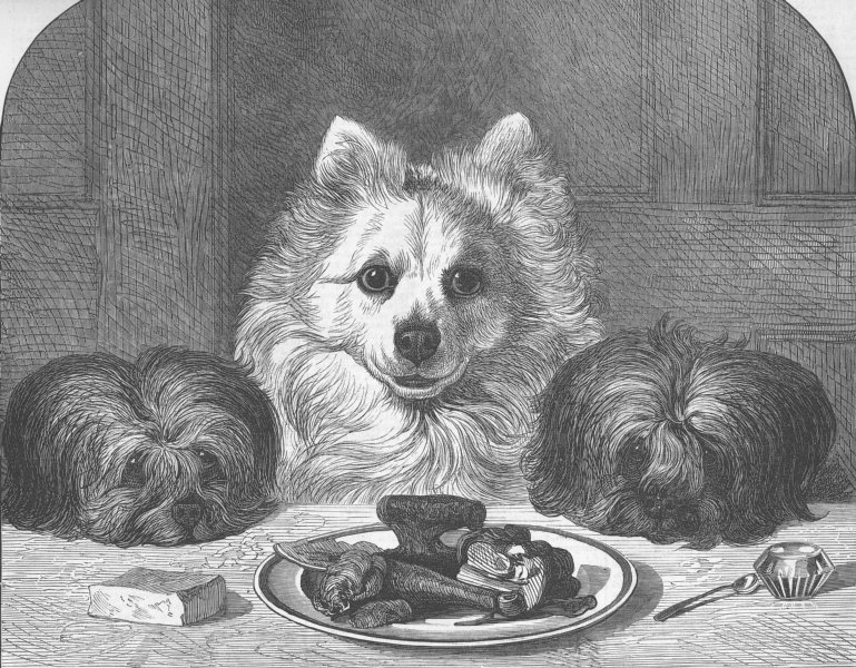 Associate Product DOGS. Great expectations, antique print, 1873