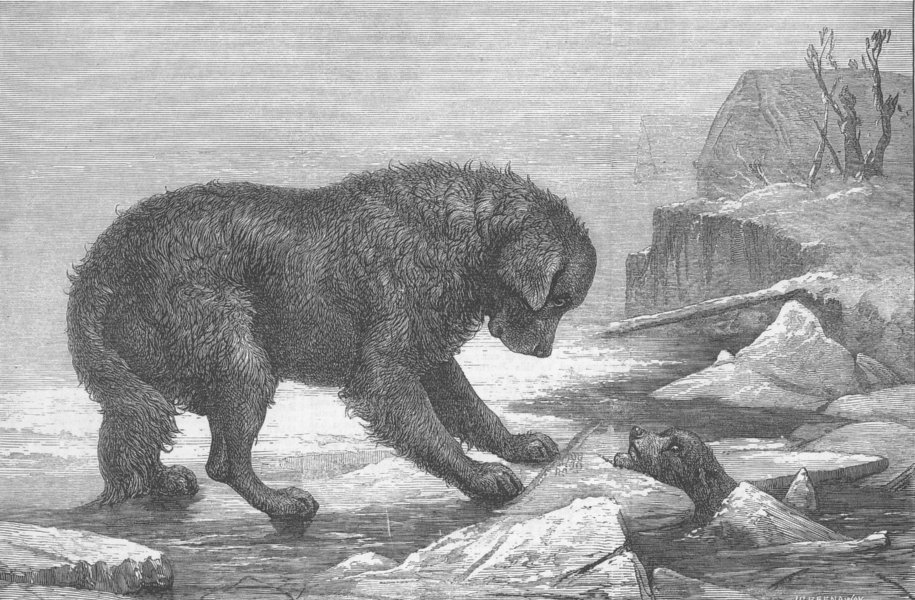 Associate Product DOGS. Erebus and terror, antique print, 1873