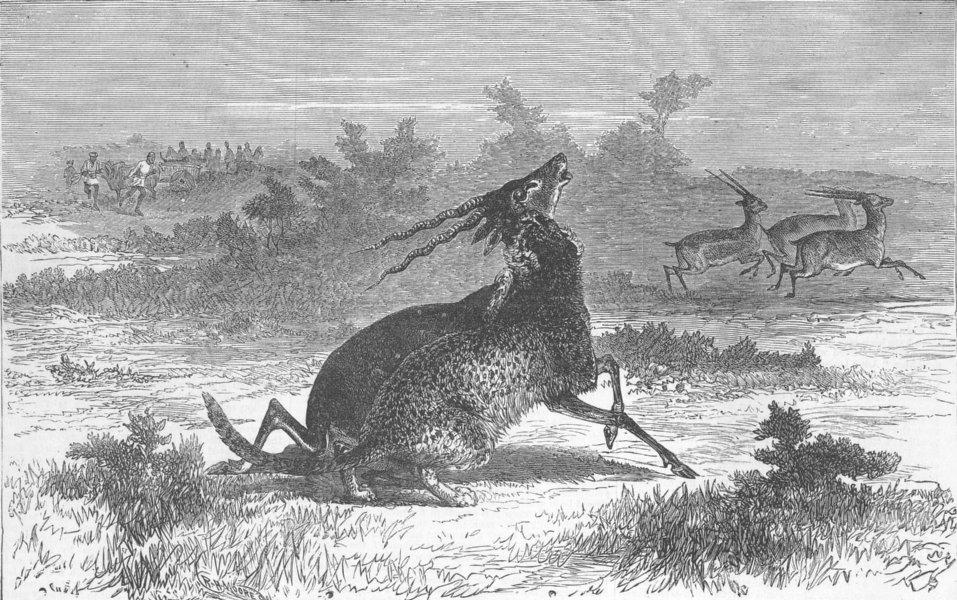 Associate Product INDIA. Hunting with cheetahs, Vadodara, antique print, c1870
