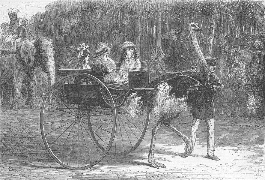Associate Product FRANCE. Jardin D'Acclimatation, Paris, antique print, 1875