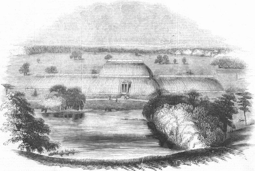 LONDON. Palm House, Royal Gdns, Kew, antique print, 1845