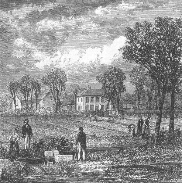 Associate Product FARMING. The Sewage Farm, antique print, 1868