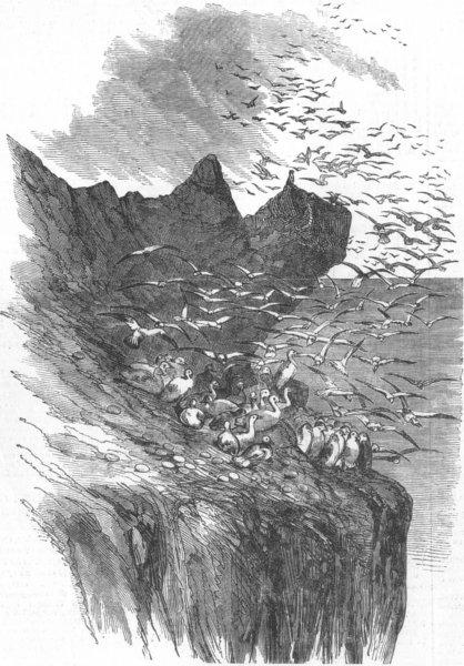 Associate Product SCOTLAND. The Bass Rock, antique print, 1850