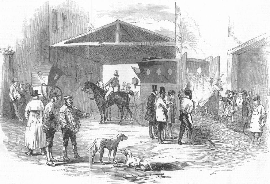 Associate Product LONDON. Smithfield Cattle Show. fat cattle arriving, antique print, 1846