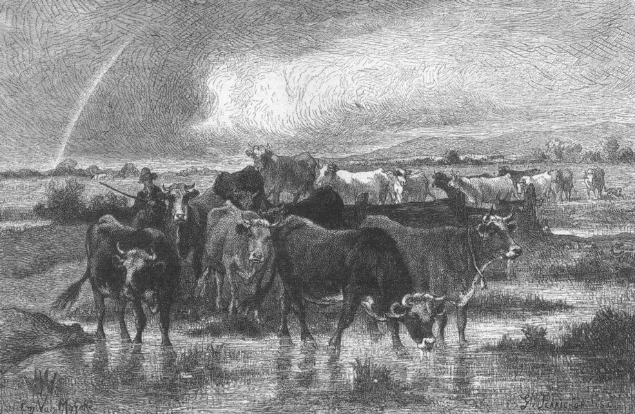 Associate Product FRANCE. village herd of cattle, Normandy, Van Marcke, antique print, 1872