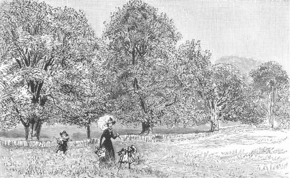 Associate Product HAMPSTEAD HEATH. Trees, edge of New Land, antique print, 1887