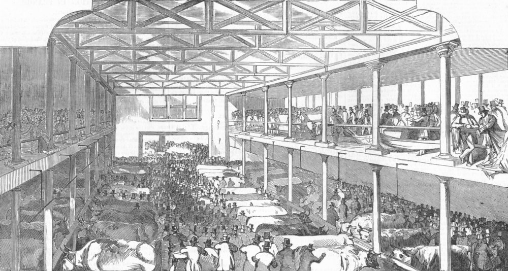 Associate Product LONDON. Smithfield club cattle-show, antique print, 1851