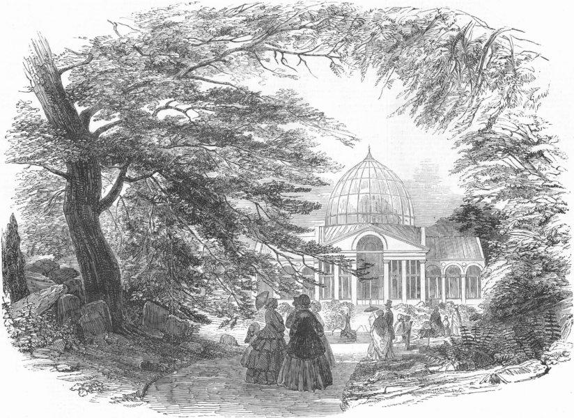 Associate Product SYON. Gt Plant House, antique print, 1852