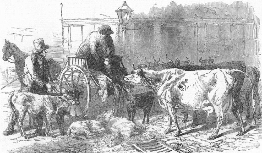 LONDON. Smithfield market-Calves & Oxen, antique print, 1849