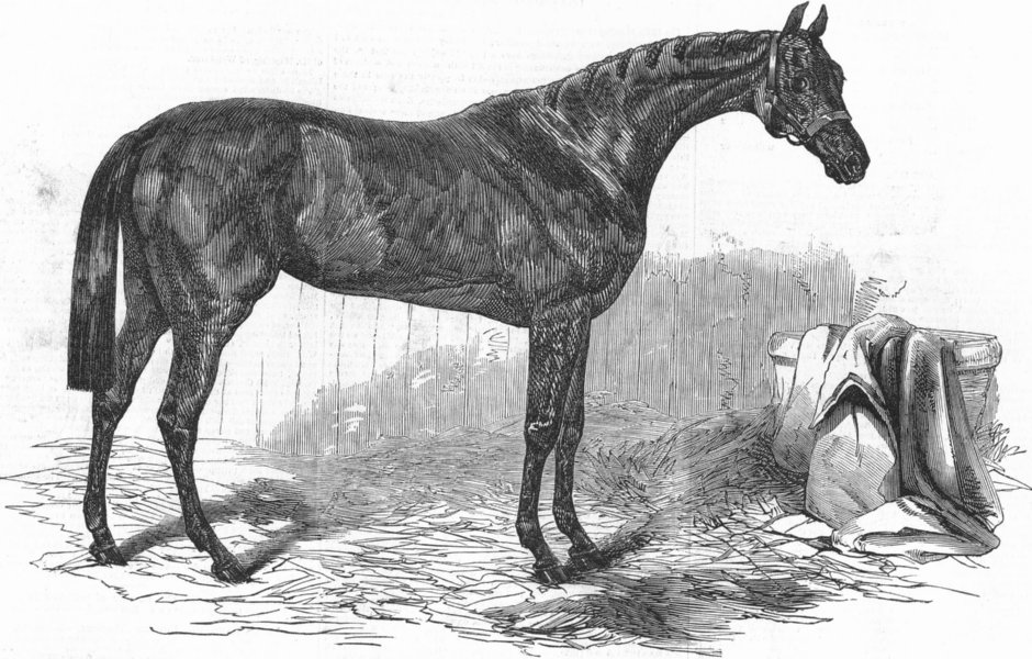 Associate Product DONCASTER. Races. Flying Dutchman, St Leger winner, antique print, 1849