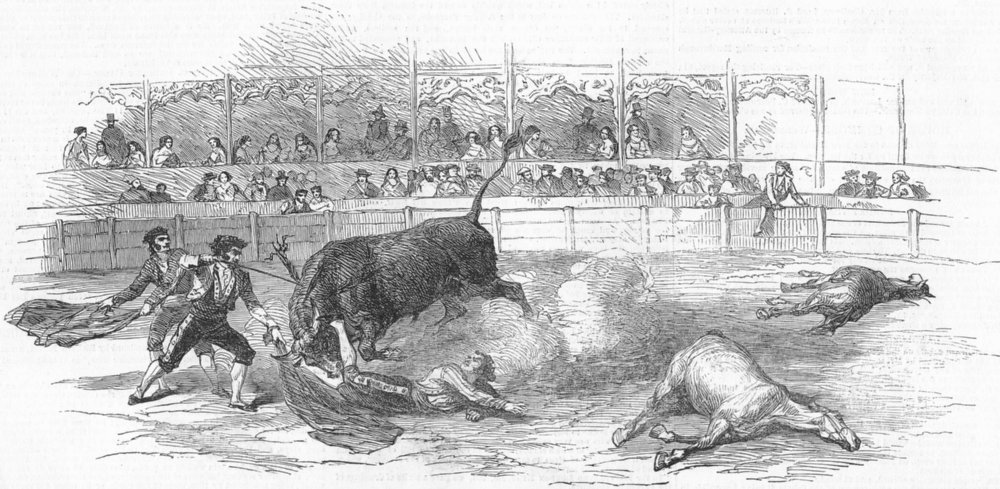 Associate Product SPAIN. Bull-Fight, Madrid-accident to Montes, Matador, antique print, 1850