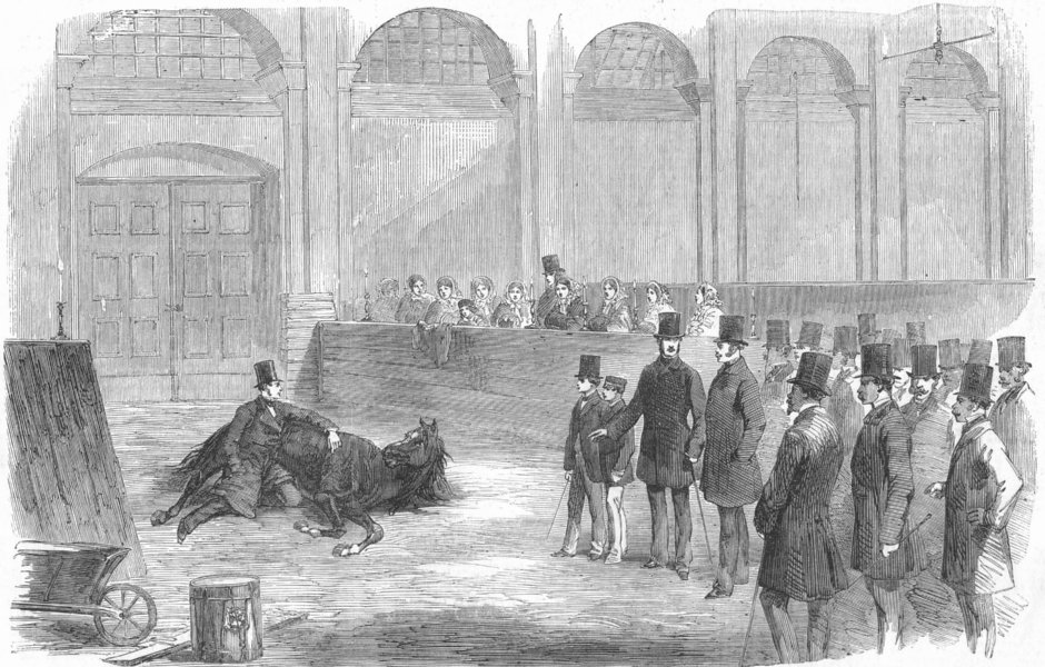 Associate Product LONDON. American Horse-Tamer, Buckingham Palace, antique print, 1858