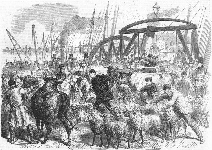 Associate Product LONDON. Landing cows, British & Foreign Wharf, Docks, antique print, 1865