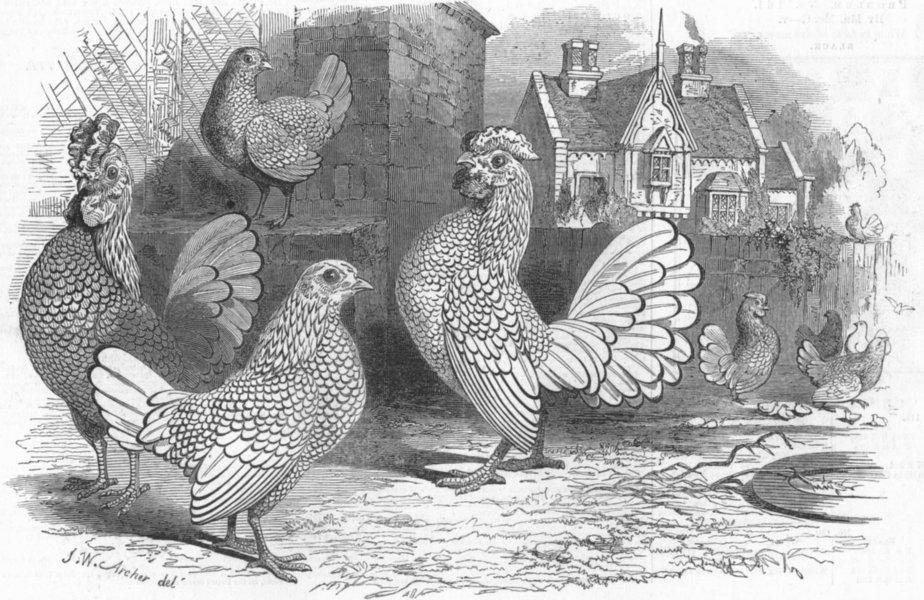 Associate Product BIRDS. Prize Bantams-1 Golden hen 2 cock 3 Silver 4, antique print, 1847
