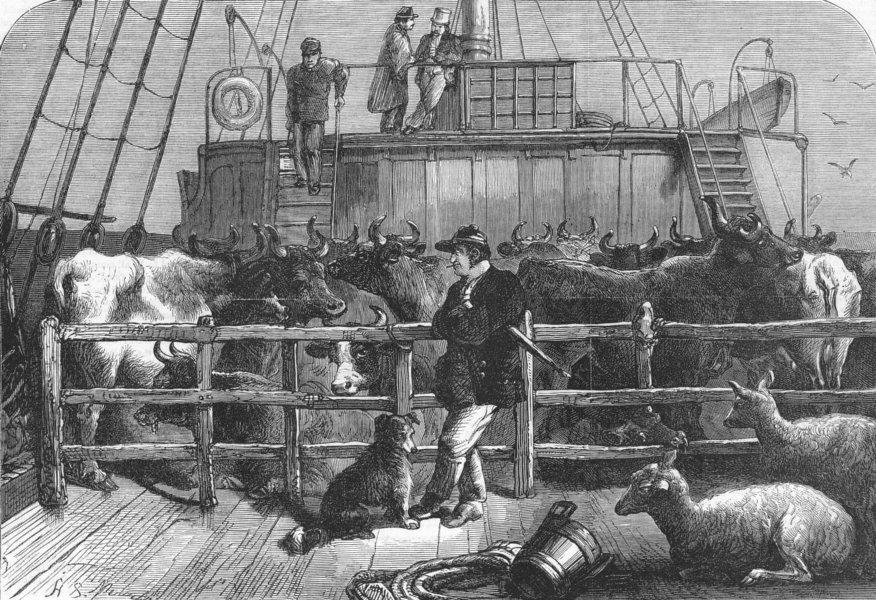 Associate Product LONDON. Foreign cows Batavier & Rotterdam ship, antique print, 1865