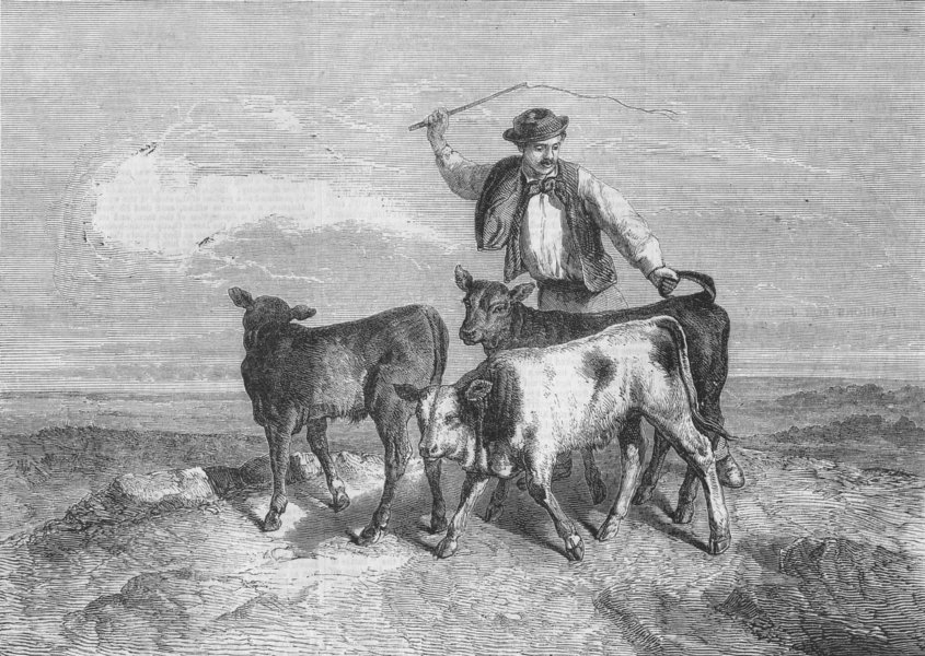Associate Product COWS. Going to market, antique print, 1859