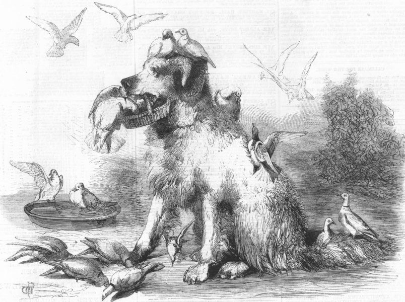 Associate Product DOGS. Folly and her little friends, antique print, 1860