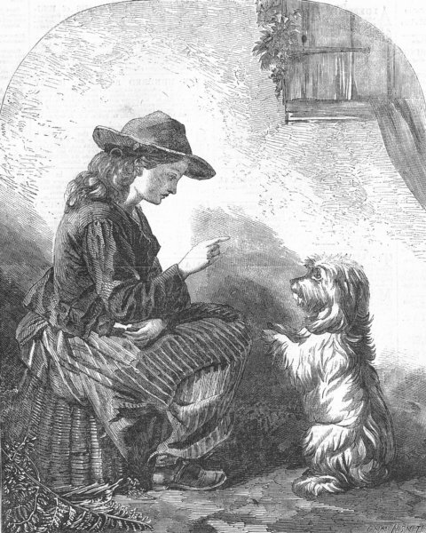 Associate Product DOGS. Beg, Sir!, antique print, 1857