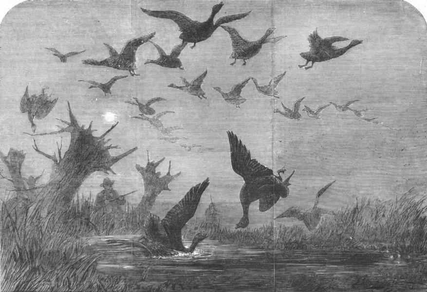 Associate Product BIRDS. Wild-duck shooting, antique print, 1857