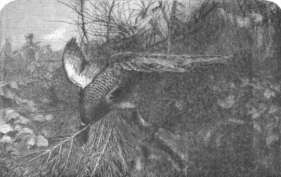 Associate Product BIRDS. Pheasant-Shooting, antique print, 1857