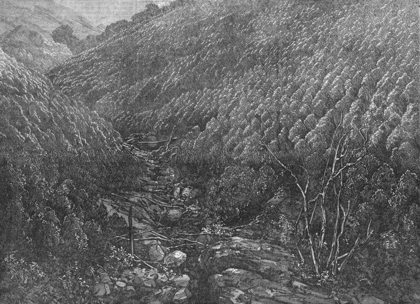 Associate Product CHENNAI. Balmadie's Cinchona plantation Dolacamund , antique print, 1872