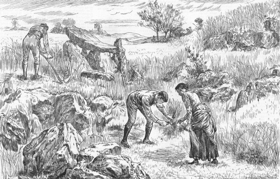 Associate Product KERRY. Redvers Buller. Saving harvest, Cahir Mtns, antique print, 1886