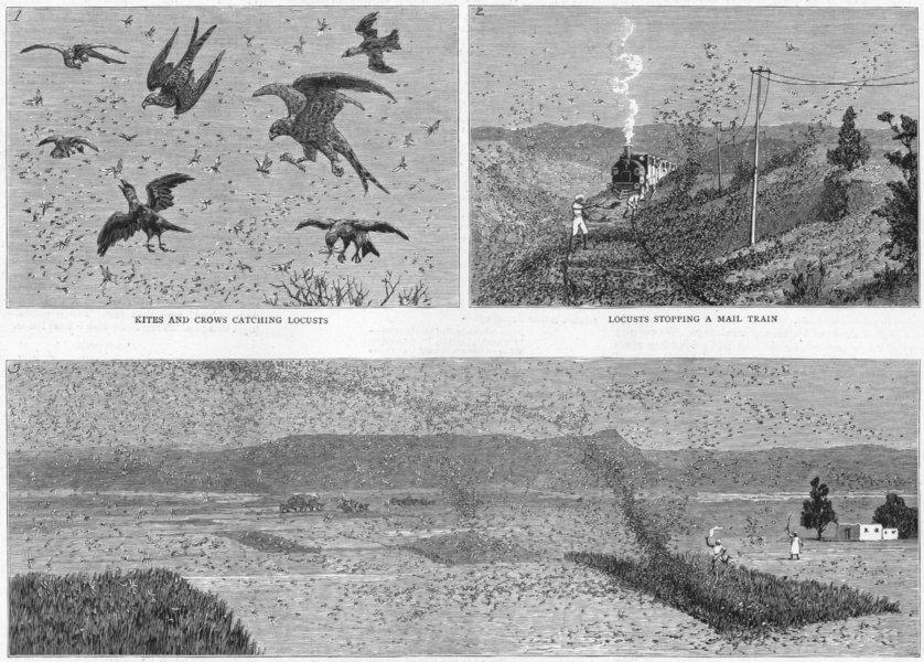 Associate Product INDIA. Locust Plague North. Kites, crows, train, crops, antique print, 1891
