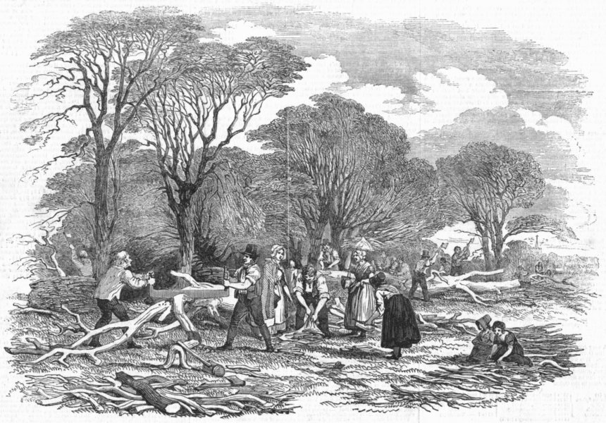 Associate Product FARMING. Agricultural pictures-Lopping timber, antique print, 1846