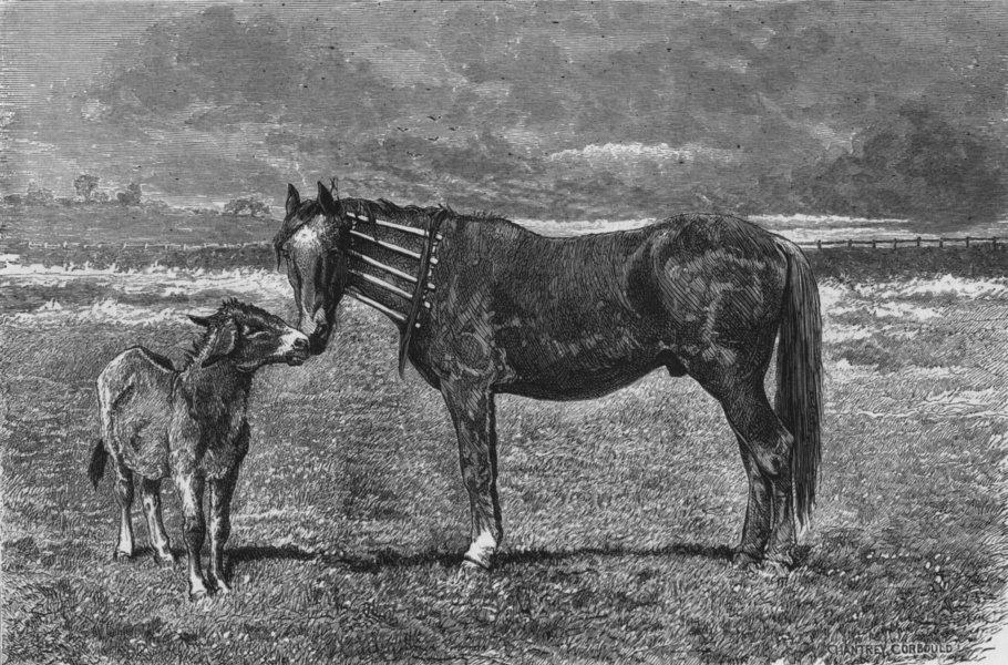 Associate Product HORSES. Kind inquiries, antique print, 1874