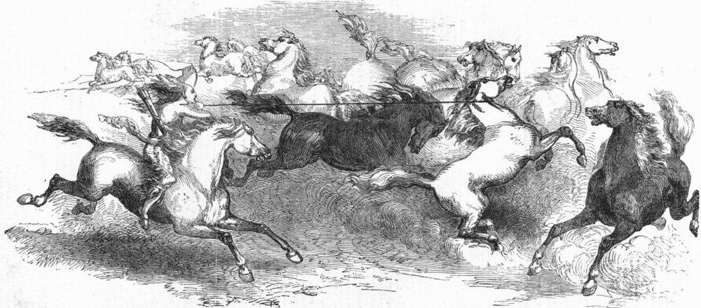 Associate Product MILITARIA. Faton stone's capture of horse prairie, antique print, 1851