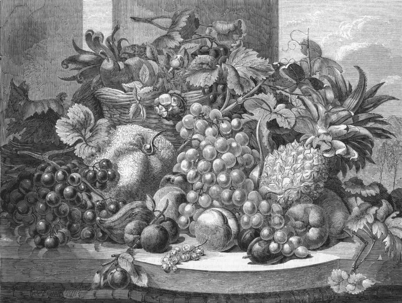 Associate Product FOOD. Fruit, painted from nature, antique print, 1859