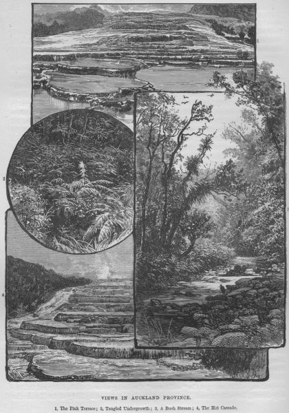 Associate Product AUCKLAND. The Pink Terrace; A Bush Stream; The Hot Cascade 1882 old print