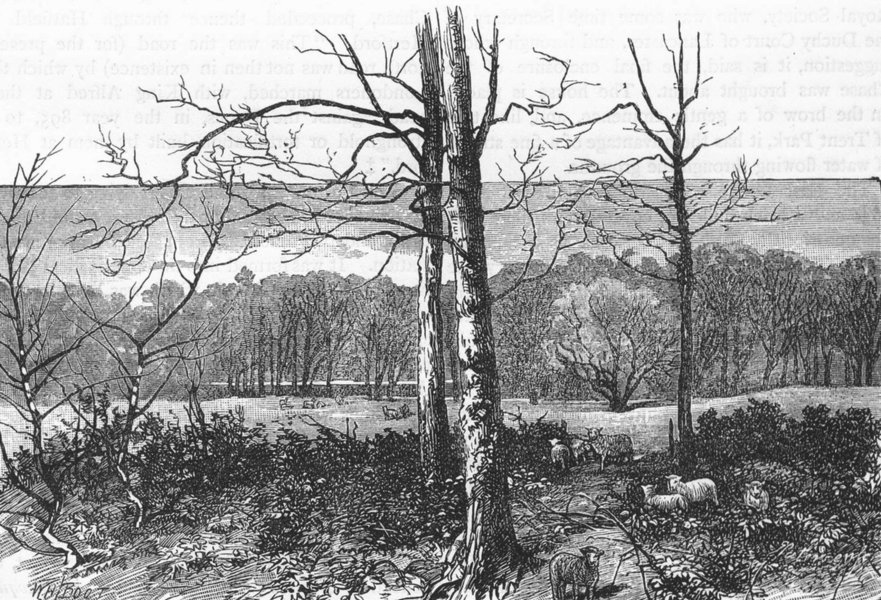 Associate Product ENFIELD CHASE. In Beech Hill Park. Essex 1888 old antique print picture