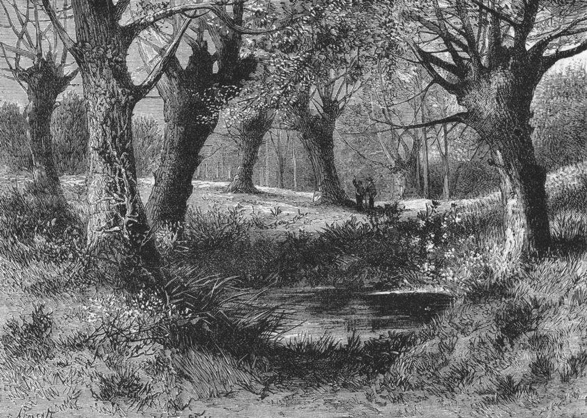 Associate Product ESSEX. WALTHAM ABBEY. Ambresbury Banks 1888 old antique vintage print picture