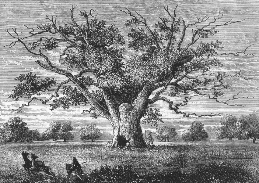Associate Product HAINAULT FOREST AND ALDBOROUGH HATCH. Fairlop Oak, 1800 1888 old antique print