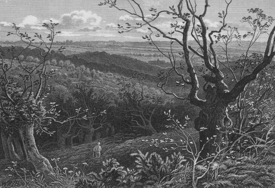 Associate Product EPPING FOREST. Near High Beech / High Beach. Essex 1888 old antique print