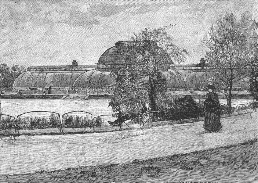Associate Product KEW GARDENS. The Palm House 1888 old antique vintage print picture