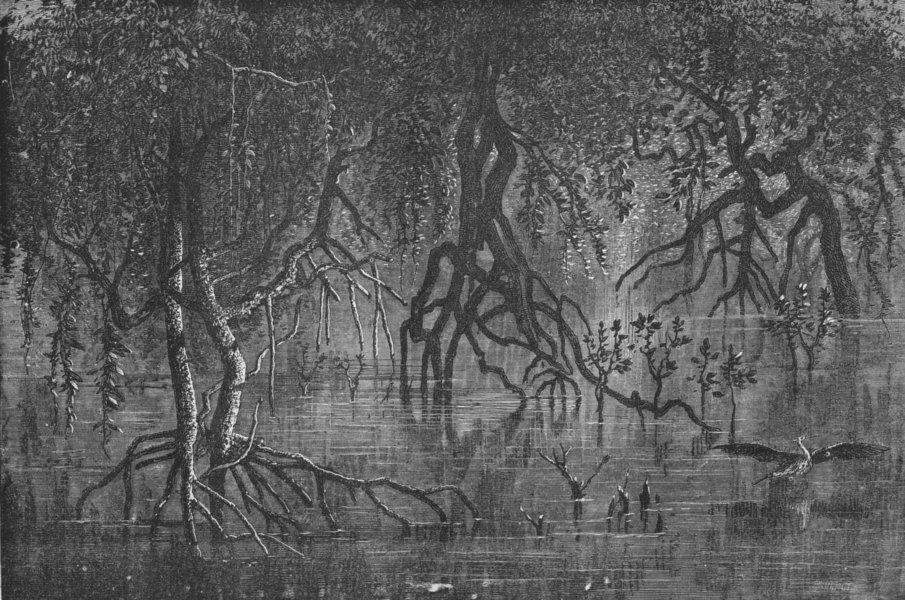 Associate Product ERITREA. Mangroves near Gherar 1880 old antique vintage print picture