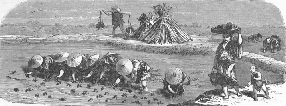 Associate Product JAPAN. Japanese in the rice-field 1880 old antique vintage print picture