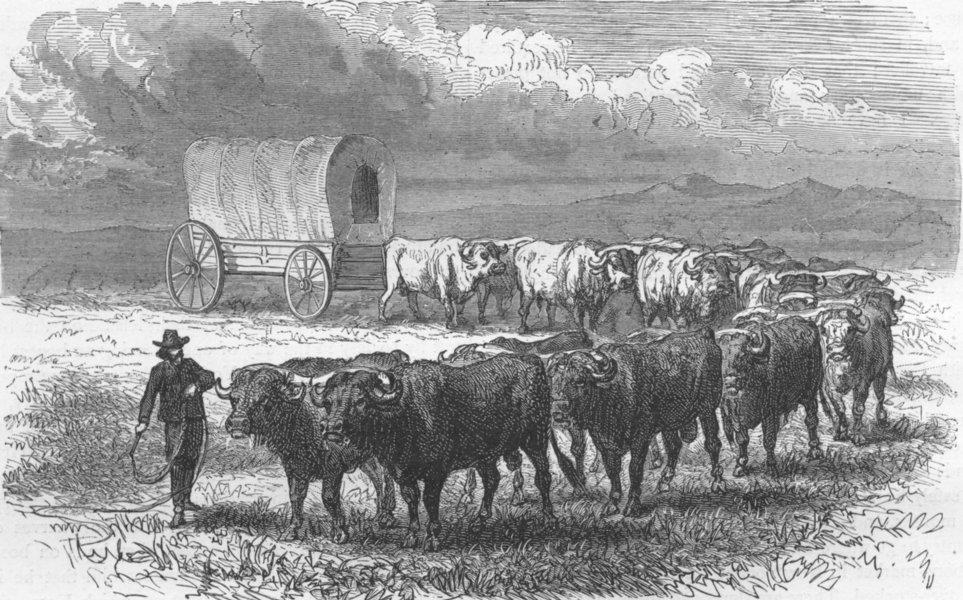 Associate Product USA. Prairie Schooner-Emigrant wagon, plains 1880 old antique print picture