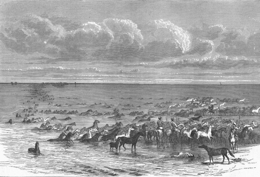 RUSSIA. Volga. troop of horses crossing 1880 old antique vintage print picture