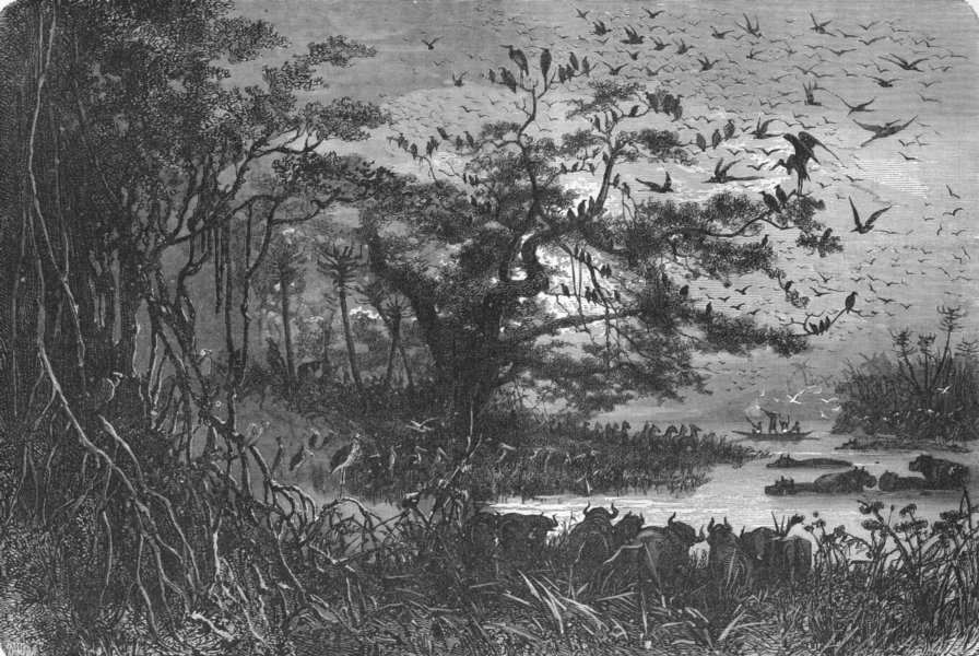 Associate Product CENTRAL AFRICA. Lake scenery 1880 old antique vintage print picture