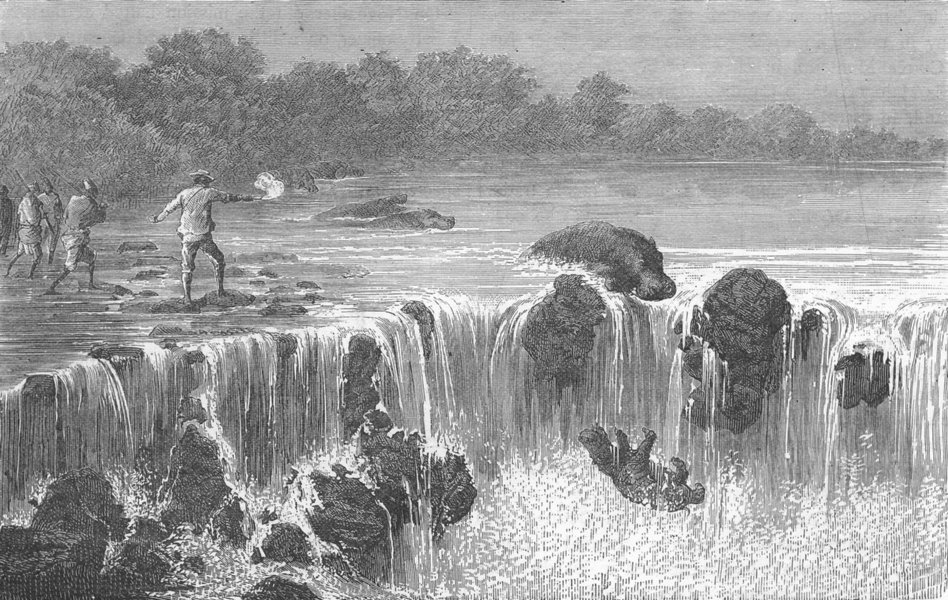 Associate Product MALI. Hippopotami, falls of Senegal, in Bambouk 1880 old antique print picture
