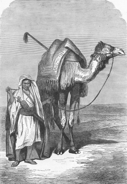 Associate Product EGYPT. The Red Sea. Camel driver 1880 old antique vintage print picture