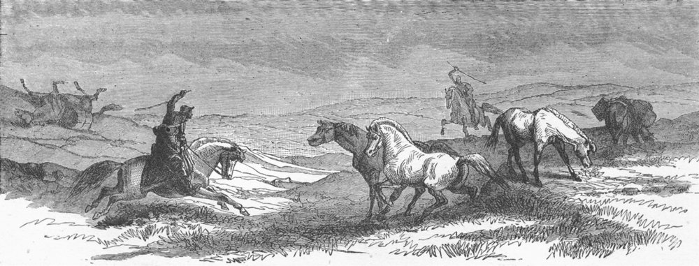 Associate Product ICELAND. Iceland. Driving Ponies 1880 old antique vintage print picture