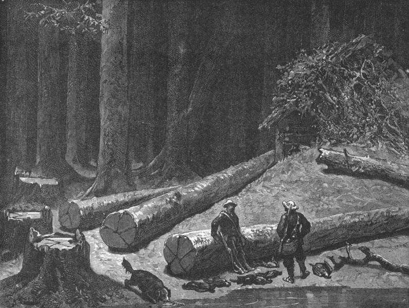 Associate Product WISCONSIN. Camp in a Pine Forest 1880 old antique vintage print picture