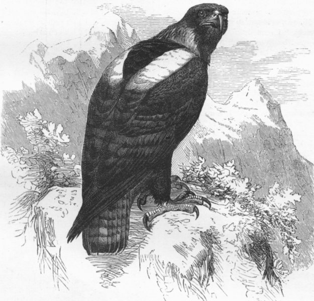 Associate Product MOROCCO. Atlas mountains. Imperial eagle 1880 old antique print picture