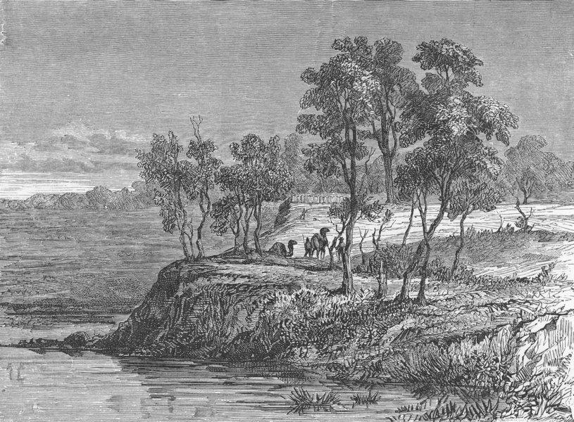 Associate Product AUSTRALIA. Bush Queensland. Warrego creek 1880 old antique print picture