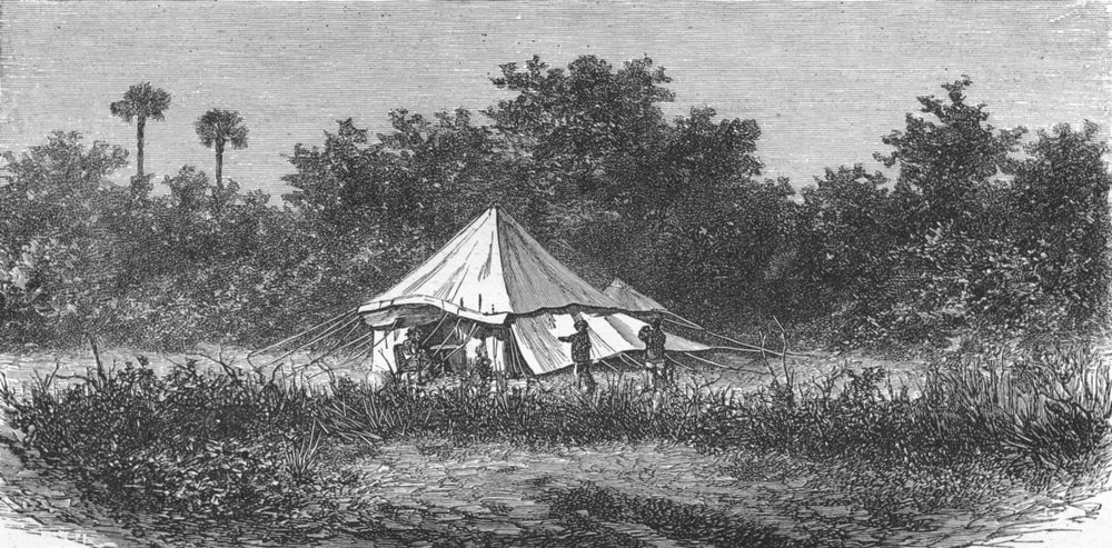 Associate Product INDIA. Indian Wolf Canis Pallipes. Sportsman's tent 1880 old antique print